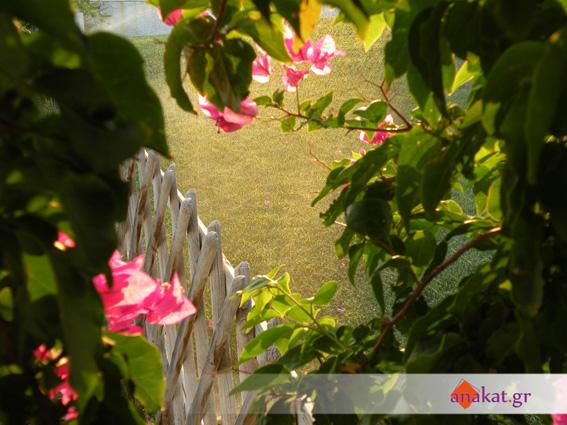 Διαμόρφωση Καλλωπιστικών φυτών και γκαζόν