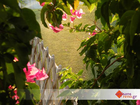 Aménagement d'un espace extérieur avec plantes décoratives et gazon