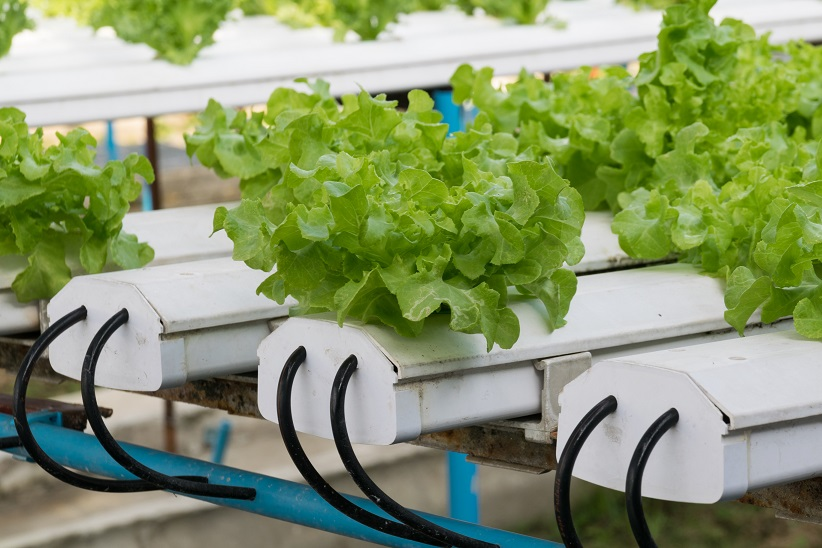 ATC Supervisor Greenhouse module and MBrick controller can make NFT hydroponics production easy