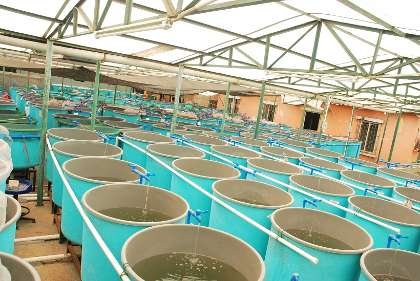 ATC Supervisor Aquaculture module and MBrick controller can monitor and control fish tanks